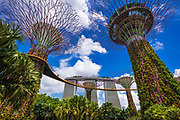 The Supertree Grove at Gardens by the Bay, Singapore, Republic of Singapore