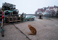 © Licensed to London News Pictures. 03/04/2014<br /> <br /> Whitby, North Yorkshire, United Kingdom<br /> <br /> A cat sits waiting by lobster pots on the harbour side at Whitby, North Yorkshire.<br /> <br /> Photo credit : Ian Forsyth/LNP