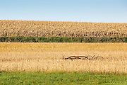This image is an early fall view of an Iowa farmer's hay rake nestled in rolling hills and picturesque soybean and cornfields as the autumn harvest season approaches. The photograph was taken on an early September morning.