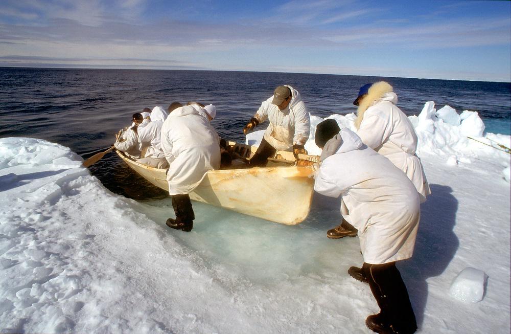 Alaska Native whaling crew launching their umiak to hunt for bowhead whales