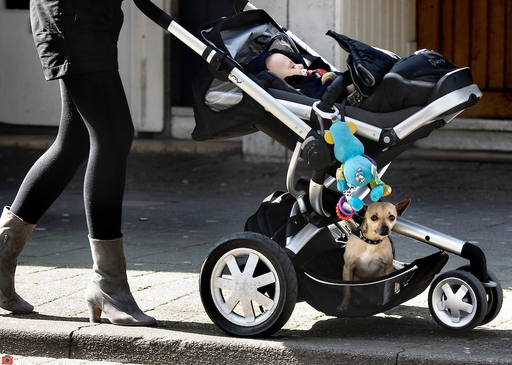 Nederland Rotterdam 2 april 2009 20090402 Foto: David Rozing ..Moeder wandelt met buggy, in buggy ligt zowel een baby als een klein hondje .Mother taking a strawl with buggy, in buggy a child and little dog. funny, humor ..Foto: David Rozing