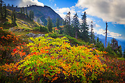 """Mountain ash in early fall near Park Butte in the Mount Baker Wilderness.<br /> .....<br /> Captured with a Canon 5D Mk II and Canon EF 28-70/2.8L lens.<br /> .....<br /> Mount Baker, also known as Koma Kulshan or simply Kulshan, is an active glaciated andesitic stratovolcano in the Cascade Volcanic Arc and the North Cascades of Washington State in the United States. Mount Baker has the second-most thermally active crater in the Cascade Range after Mount Saint Helens. About 31 miles (50 km) due east of the city of Bellingham, Whatcom County, Mount Baker is the youngest volcano in the Mount Baker volcanic field. While volcanism has persisted here for some 1.5 million years, the current glaciated cone is likely no more than 140,000 years old, and possibly no older than 80-90,000 years. Older volcanic edifices have mostly eroded away due to glaciation.<br /> .....<br /> After Mount Rainier, Mount Baker is the most heavily glaciated of the Cascade Range volcanoes; the volume of snow and ice on Mount Baker, 0.43 cu mi (1.79 km3) is greater than that of all the other Cascades volcanoes (except Rainier) combined. It is also one of the snowiest places in the world; in 1999, Mount Baker Ski Area, located 14 km (8.7 mi) to the northeast, set the world record for recorded snowfall in a single season—1,140 in (2,900 cm).<br /> .....<br /> At 10,781 ft (3,286 m), it is the third-highest mountain in Washington State and the fifth-highest in the Cascade Range, if Little Tahoma Peak, a subpeak of Mount Rainier, is not counted. Located in the Mount Baker Wilderness, it is visible from much of Greater Victoria, Greater Vancouver, and, to the south, from Seattle (and on clear days Tacoma) in Washington.<br /> .....<br /> Indigenous natives have known the mountain for thousands of years, but the first written record of the mountain is from the Spanish. Spanish explorer Gonzalo Lopez de Haro mapped it in 1790 as the Gran Montaña del Carmelo, """"Great Mount Carmel"""". The explorer George Van"""