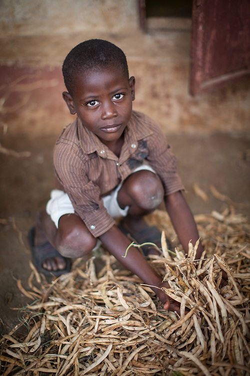 The whole family help out at harvest time in Léogane, Haiti.