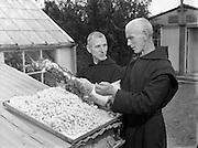 02/09/1954<br /> 09/02/1952<br /> 02 September 1952<br /> Mount St Joseph Abbey, Roscrea, Special, Fr Dermot Coleman (left), Silk Spinning.
