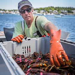 Captain Steve Rosen unloads lobsters aboard 'Star Fisher' at the Vinalhaven Fishermen's Co-op in Vinalhaven, Maine.