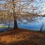 University of Florida-Lake Alice Area