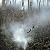 Smoking Log,<br />