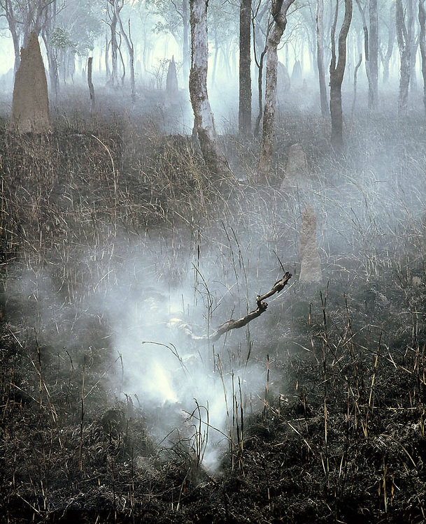 Smoking Log,<br /> Fuel Reduction Burn,<br /> Lakefield NP<br /> FNQ