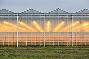 Kassen in Nederlands landschap.    Greenhouses in the Dutch landscape.