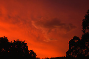 Phoenix rising - Sunset after a rain storm over the bush, Australia <br />
