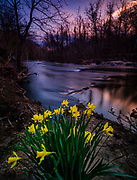 Spring Flowers Along the Patapsco River in Oella, Maryland.