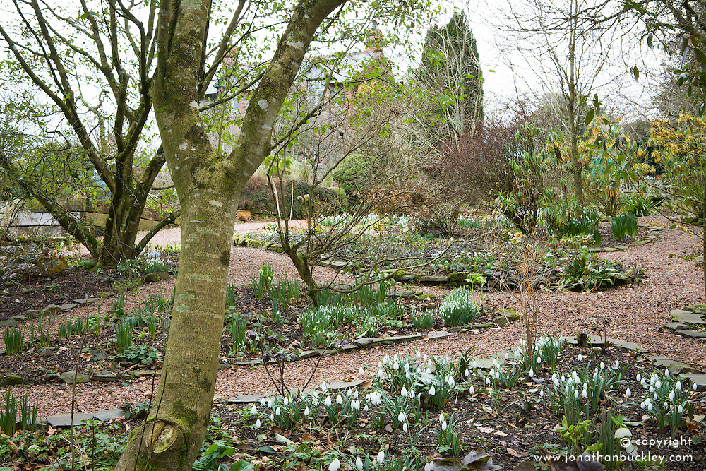 Looking towards the house from the woodland area at Glebe Cottage with snowdrops in the foreground
