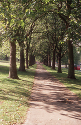 Trees in park in summer,