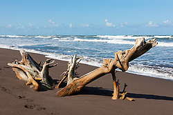 Driftwood on the beach, Samara, Costa Rica