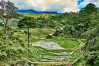 rice paddy terrace fields between banaue and batad infugao Luzon in Philippines
