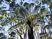 Tree fern silhouette pattern, Abel Tasman National Park, South Island, New Zealand.