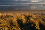 Jogger runs along remote deserted sandy beach of Northumberland coast beyond long grass dunes near Bamburgh