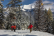 Ski Touring on Firefighter Mountain with Great Northern in background in the Flathead National Forest, Montana, USA MR