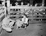 "ackroyd-08537-2. ""Portland Union Stockyards. 4-H Club Tour. September 5, 1958"""