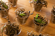 """Shiso mint pesto with soba noodles by Cathy Erway, blogger of """"Not Eating Out in NY"""" and author of """"The Art of Eating In."""""""