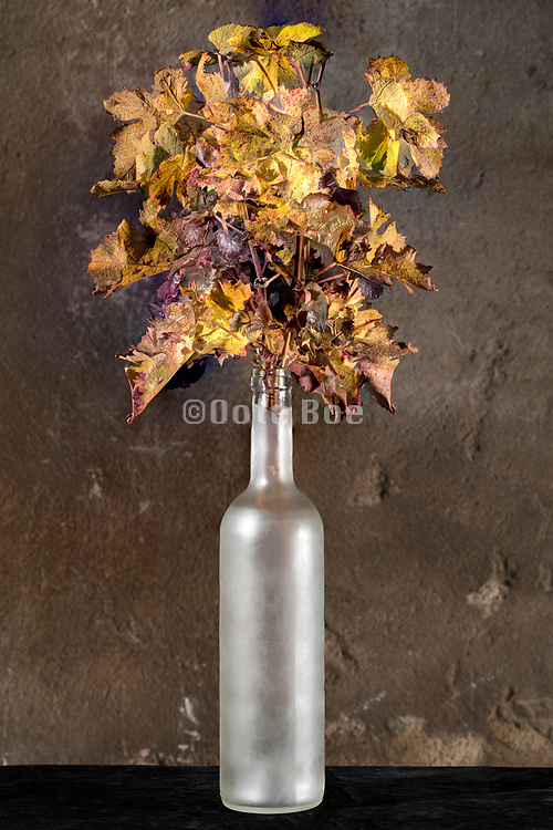 autumn season leaf composition in froted glass bottle