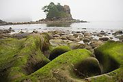 Sculpted rocks and sea stacks along the North Coast, Olympic National Park, Washington.