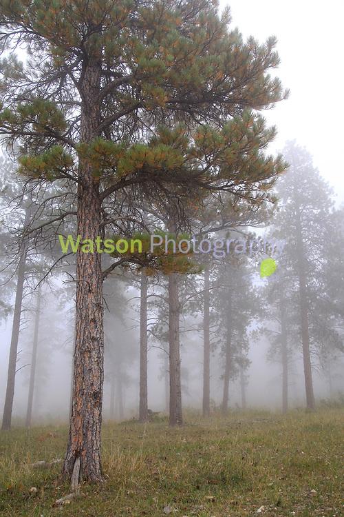 Black Hills Mystic