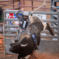 062014       Cable Hoover<br /> <br /> Junior bull rider Tristan Cody holds on to a bull called Shake It Up during the Lions Club Rodeo at Red Rock Park in Gallup Friday.