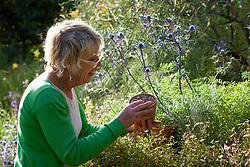 Carol Klein inspecting freshly germinated seeds of Pulsatilla vulgaris