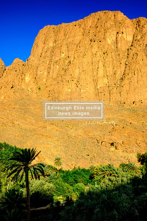 Todra oasis in the early morning, Todra Gorge, Morocco<br /> <br /> (c) Andrew Wilson   Edinburgh Elite media