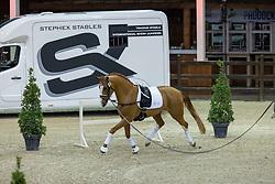 07082, Sunnyboy van de Kempenhoeve<br /> BWP Hengstenkeuring 2021<br /> © Hippo Foto - Dirk Caremans<br />  13/01/2021