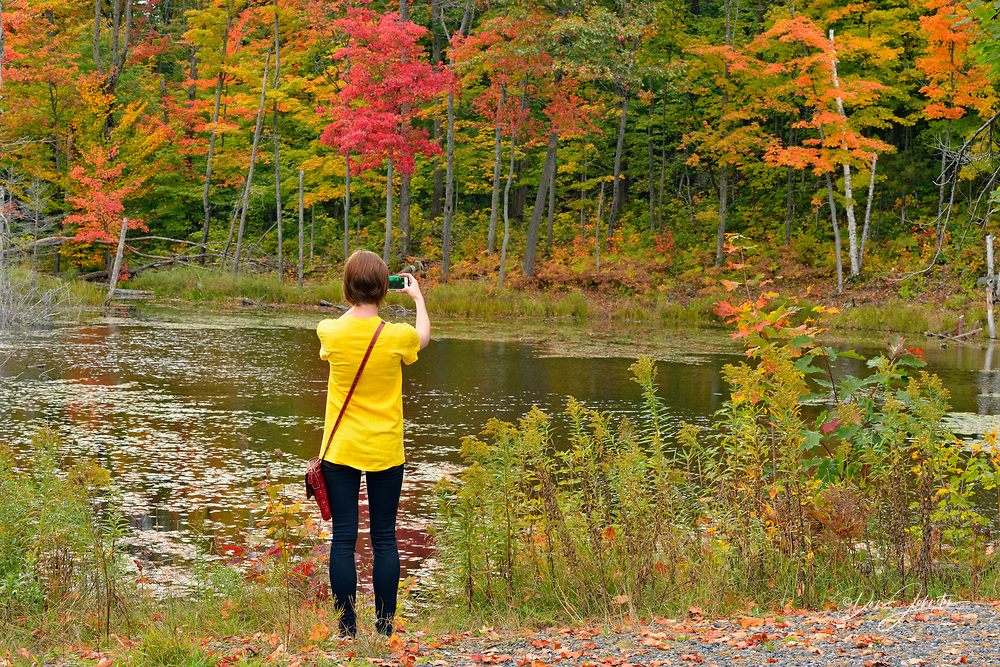 Young lady taking pictures of autumn colour, Nobel, Ontario, Canada