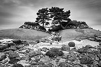 Rough coast line, Brooklin, Maine, USA
