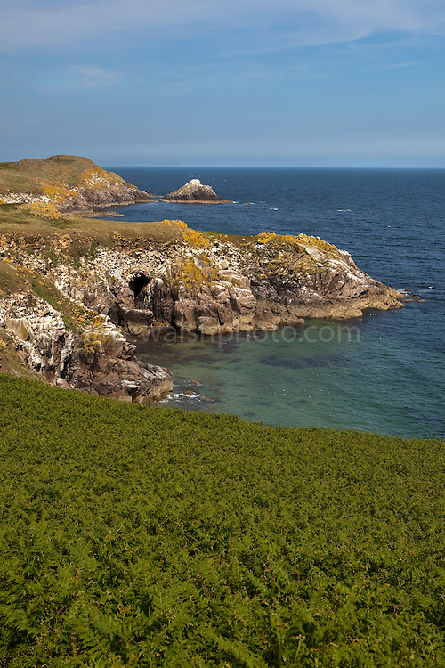 """View of the cliffs and bracken at Ardheen on the south, windward side of the Great Saltee, the larger of the Saltee Islands, off the coast of Co. Wexford, Ireland.  The """"Happy Hole"""" cave is visible,  and the rock in the background is the """"MakeStone"""". To the right are the Collough Rocks."""