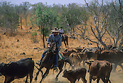 Kimberley, the rugged Australia's last frontier. Cowboys near Whindam.