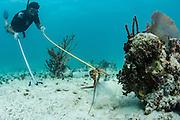 Lobster fisher<br /> Nelson Norellana<br /> Caye Caulker<br /> Ambergris Caye<br /> Belize<br /> Central America