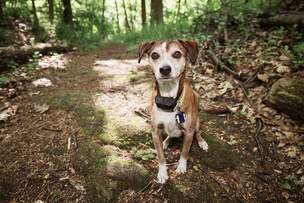 small dog out for a hike