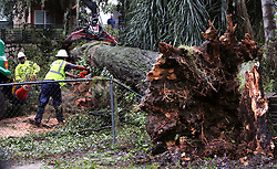 October 7, 2016 - Orlando, FL, USA - Workers cut up a massive oak tree that closed Haven Drive in the Ivanhoe District of Orlando, Fla., after winds from Hurricane Matthew pass through central Florida on Friday, Oct. 7, 2016. (Credit Image: © Joe Burbank/TNS via ZUMA Wire)