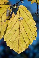 Structure of leaf on backlight