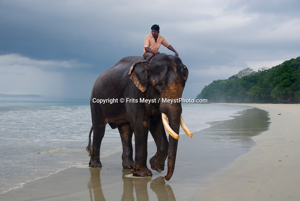 Andaman and Nicobar Islands, India, April 2008. snorkeling with Rajan the elephant that takes a daily swim in the sea. The remote Andaman Islands are an upcoming eco tourism and active adventure destination. Photo by Frits Meyst/Adventure4ever.com