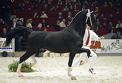 865 Teo<br />KWPN hengstenkeuring 2003<br />Photo © Dirk Caremans