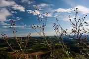 Pocos de Caldas_MG, Brasil...Flores com vista panoramica das montanhas de Pocos de Caldas ao fundo...Flowers with the panoramic view of mountain in Pocos de Caldas in the background...Foto:LEO DRUMOND / NITRO