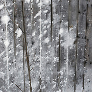 Noorwegen Gol 27 december 2008 20081227 Foto: David Rozing .Wintertafereel, stilleven van kaal boompje voor oud houten hutje met sneeuwplekken .Wintertime, still of little tree in front of an old wooden cottage with snow stains on it .Foto: David Rozing