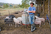 An apprentice at  Joel Salatin's farm tends to pigs as they feed in an open area at the farm in Virginia's Shenandoah Valley.  (Joel Salatin is featured in the book What I Eat: Around the World in 80 Diets.)