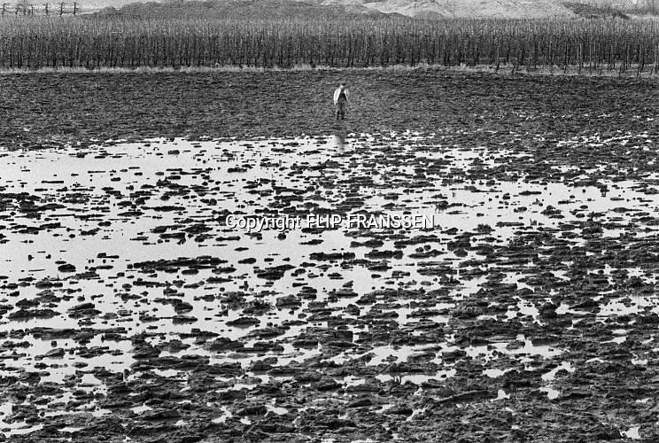 Nederland, Ooij, 04-03-1995Eind januari, begin februari 1995 steeg het water van de Rijn, Maas en Waal tot record hoogte van 16,64 m. bij Lobith. Een evacuatie van 250.000 mensen was noodzakelijk vanwege het gevaar voor dijkdoorbraak en overstroming. op verschillende zwakke punten werd geprobeerd de dijken te versterken met zandzakken. Hier in de Ooijpolder bij Nijmegen bekijkt een boer de schade aan zijn weiland.Late January, early February 1995 increased the water of the Rhine, Maas and Waal to a record high of 16.64 meters at Lobith. An evacuation of 250,000 people was needed because of flood risk. At several points people tried to reinforce the dikes with sandbags. Foto: Flip Franssen/Hollandse Hoogte