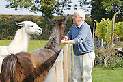 Will Gissane feeding Hamish (left) and Hugo (right) the llamas a vine trimming from the vineyard at his Herefordshire home<br /> CREDIT: Vanessa Berberian for The Wall Street Journal<br /> HOBBY-Gissane/UK