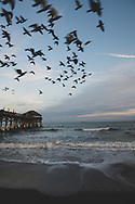 Pigeons take to the sky at sunset at the Cocoa Beach Pier in Brevard County, Florida. A cruise ship, the Disney Wonder, is anchored offshore. (December 14, 2020)