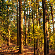 Harold Parker State Forest, late afternoon sun.