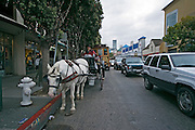 San Francisco California USA, California city downtown a horse and cart with tourists near pier 39 Fishermen's Wharf