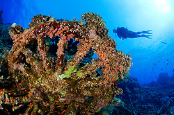 Schiffswrack Numidia, Taucher am Wrack, Brother Inseln, Shipwreck Numidia, scuba diver on ship wreck, Rotes Meer, Ägypten, Brothers Islands, Island Big Brother, Red Sea Egypt